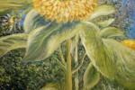 Sun Flowers Mornington ( from a photo )